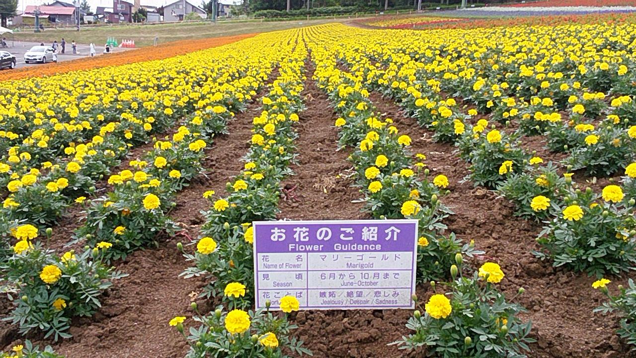 2016 『花の百名山in北海道周遊走り旅』50