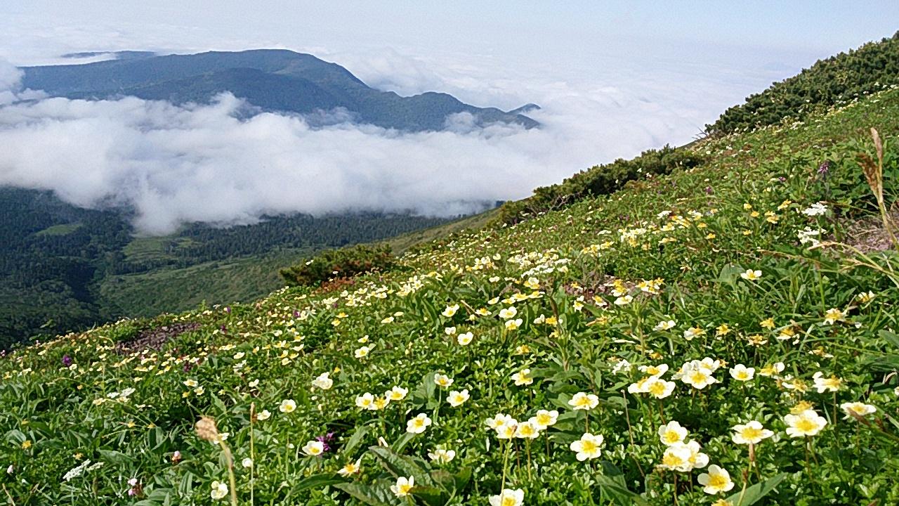 2016 『花の百名山in北海道周遊走り旅』54